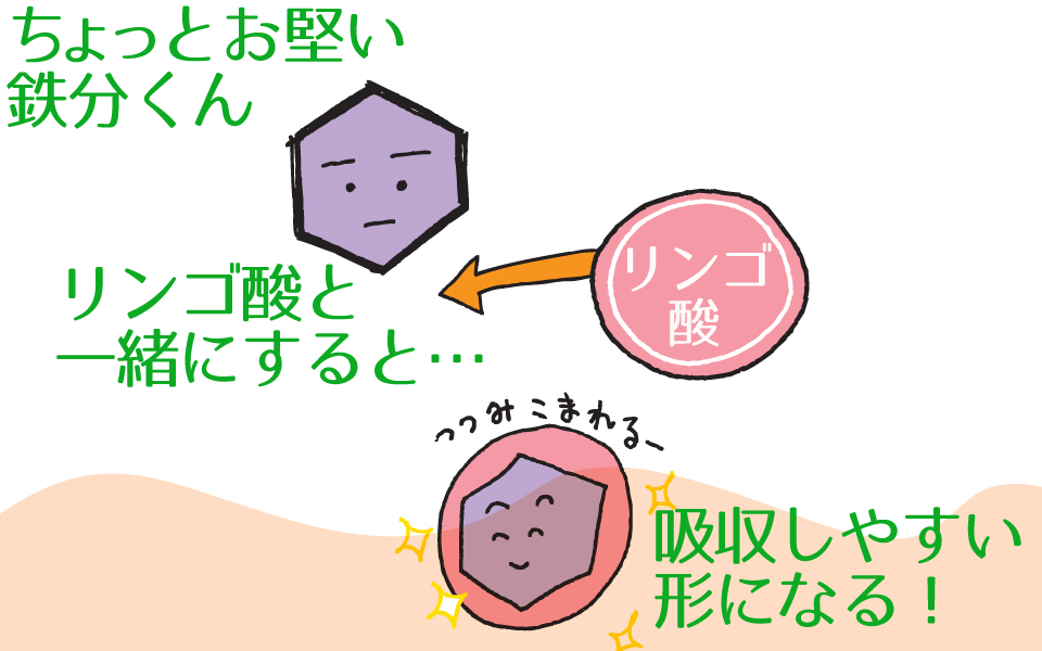 吸収しずらい鉄分は、リンゴ酸でキレート作用